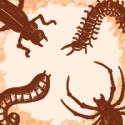 Vermifuge, anti-parasite